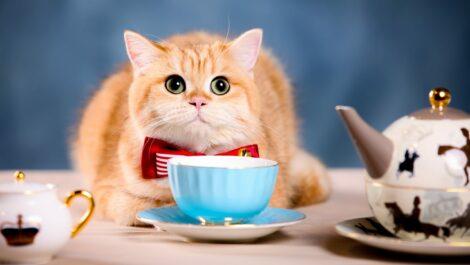 Katze sitz vor Kaffeetasse